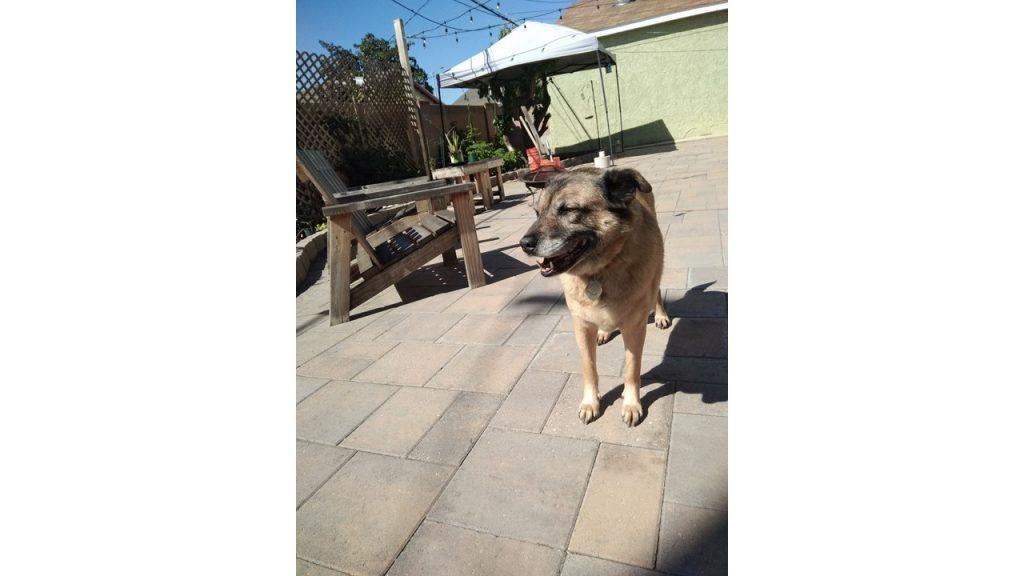 dog standing in sun
